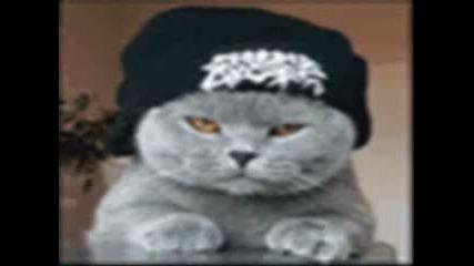 Котки Терористи - Мега Пародия