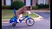 Куче кара колело - Много смях