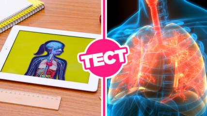 ТЕСТ: Знаеш ли повече от гимназист за човешката анатомия?