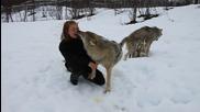 Жена си играе с глутница вълци като с домашни кучета
