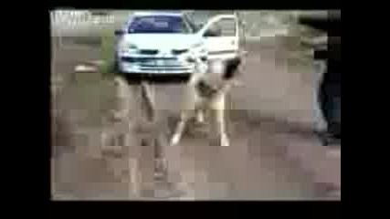 Куче тегли кола!
