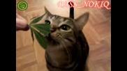Коте яда Joint - напушено коте Един мно луд човек http://vbox7.com/play:922952da