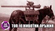 Топ 10 животни използвани по време на война