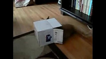 Котка в малка кутия