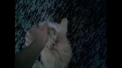 най-гальовното котенце