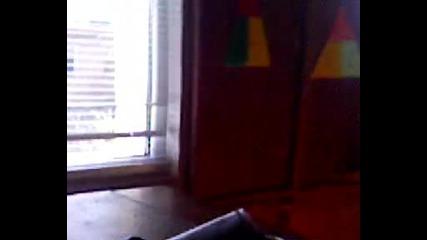 Гълъб в стаята по физика