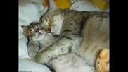 Веселина Кацарова и Едита Груберова - Комичен дует на котките - Росини