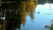 Золотая осень на голубом озере. Релакс.