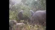 The mother Nature - Ежегодното преселение в парка Серенгети, река Мара