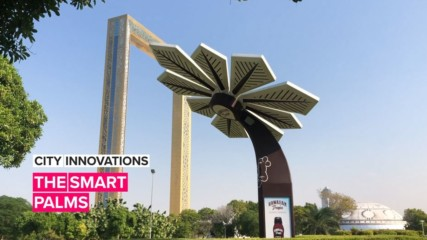 City Innovations: The palm trees that just keep giving