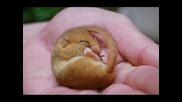 Новородени Животинки!!!