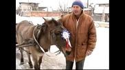 Кьорава кобила с.ясен , Плевенско