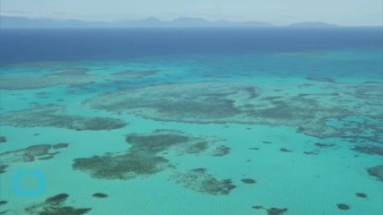 Great Barrier Reef Shouldn't Be on 'in Danger' List for Now, Says Unesco