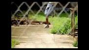 Brisco Ft Lil Wayne - In The Hood (ВИСОКО КАЧЕСТВО)