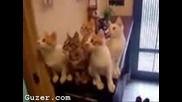 Котки Гледат Тенис