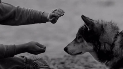 | Wolf's life| Trailer| Очаквайте скоро първи епизод|