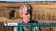 Мистериозен кръг се появи в поле с пшеница в Северна Франция
