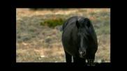 Wild Horse - 1