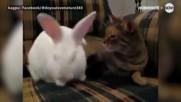 Котка и заек - верни приятели