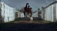 куче и кон не могат един без друг .