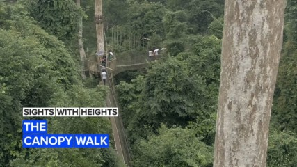 Sights with Heights: Ghana's national park canopy walk