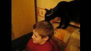 Котката Фризьор - Смях