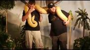 Огромна змия но къде е опашката ( Смях )