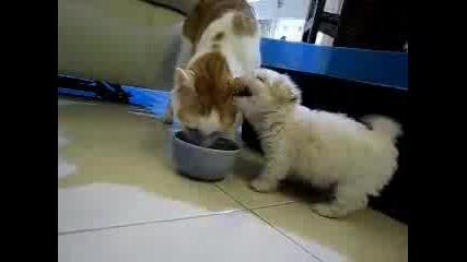 Сладко кученце си играе с голяма котка