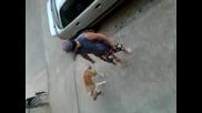 Забавление със кучета