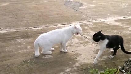 Каращи Се Котки!