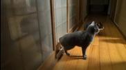 Смях - котка чука на вратата за да и отворят