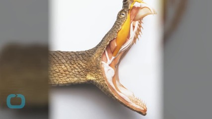 Pennsylvania Officials Probe Man's Weekend Death by Rattlesnake Bite