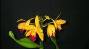 Ароматът на орхидеята - притча