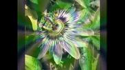 Passion Flower / Caterina Valente