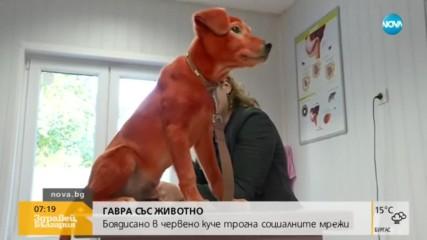ГАВРА: Боядисаха куче с червена боя за коса