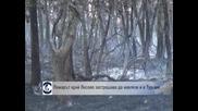 Пожарът край Лесово застрашава да навлезе и в Турция