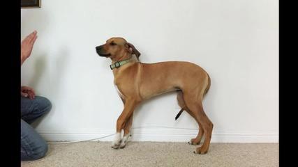 Израстването на куче в 23 секунди!