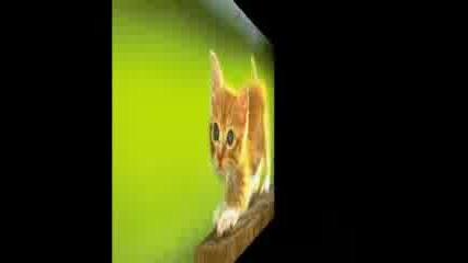 Сладки Котки