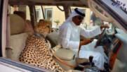 Топ 5 неща, които могат да се видят само в Дубай!
