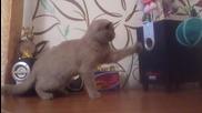 Коте се радва на музиката