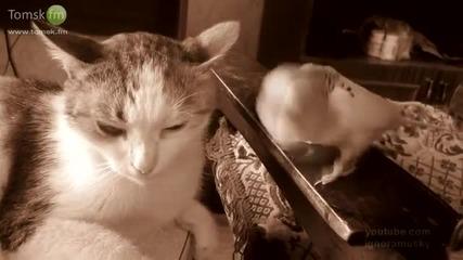 Папагал изнерви коте