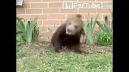 А наздраве на мечока ! [ Голям смях 100 % ]