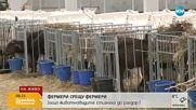 Собственик на ферма: Няма да разреша да се вземе втора проба от животните