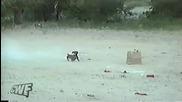 Кучето ракета ( Смях )