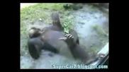 Маймуна си пипа оная работа