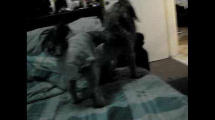 Моето Куче В Кипър