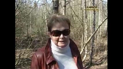 Лайки. Питомник ,,белорусский лес