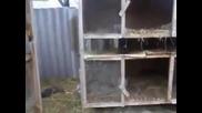 Шок в Русия 73 зайци са умрели за ра ди едно животно