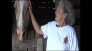 Негър изнасилва кобила