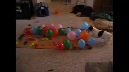 Упорито куче срещу армия от балони